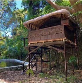 Bataan: Treetop experience
