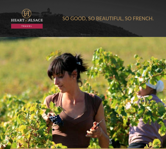 France: Wine Harvest Tour